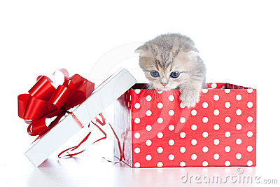 Funny baby cat in red polka dot gift box