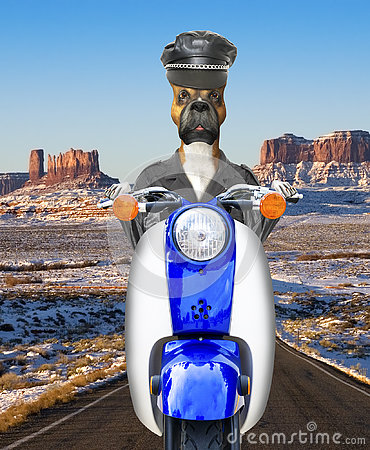Free Funny Biker Dog, Motorcycle, Riding Stock Photos - 76795823