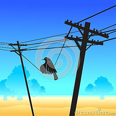 Funny bird on the poles
