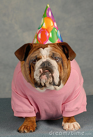 Funny Birthday Dog Royalty Free Stock Photo Image 8383795