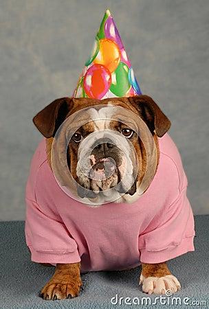 funny birthday dog royalty free stock photo image 8383795