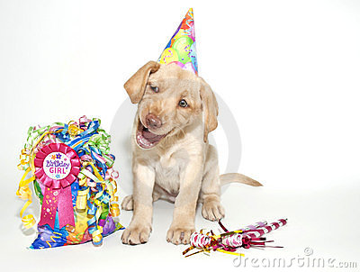 Funny Birthday Lab Puppy
