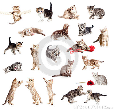 Free Funny British Kittens Collection Stock Photography - 25802472