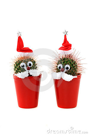 Free Funny Cactus Royalty Free Stock Images - 11156239