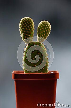 Free Funny Cactus Royalty Free Stock Photo - 13397445