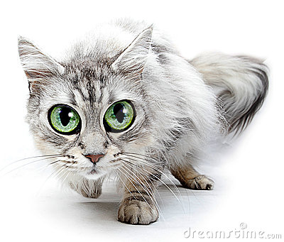 Funny Cat With Big Eyes Stock Image - Image: 24243201