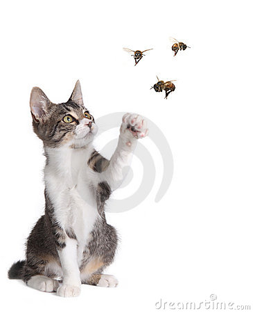 Funny Cat Catching Bees