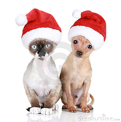 Funny cat and dog in christmas hats