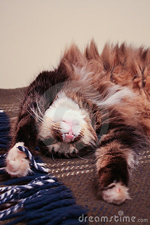 Funny Cat Dreaming