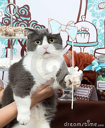 Funny cat holiday birthday party
