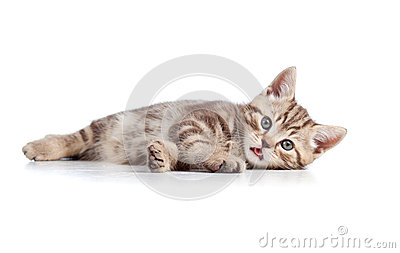 Funny cat kitten lying on floor