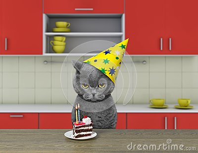 Funny cat waiting to eat chocolate cake Stock Photo