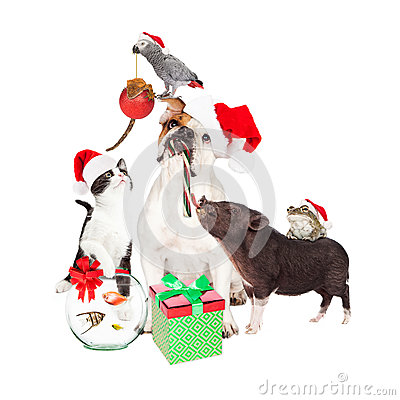 Free Funny Christmas Pet Compositie Stock Image - 63266201