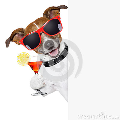Free Funny Cocktail Dog Royalty Free Stock Photography - 29959177