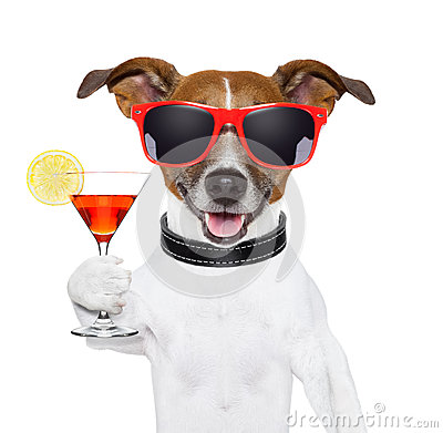 Free Funny Cocktail Dog Stock Photography - 29959182