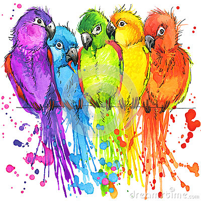 Funny colorful parrots with watercolor splash textured Stock Photo