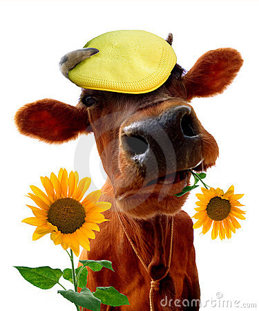 Free Funny Cow Royalty Free Stock Image - 10599696