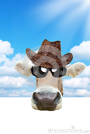 Free Funny Cow Stock Images - 25687514