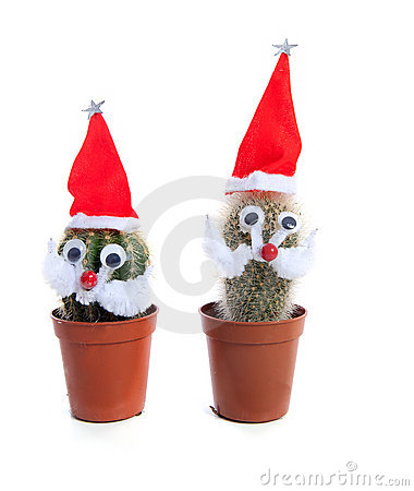 Free Funny Decorated Cactus Plants For Christmas Stock Image - 22344281