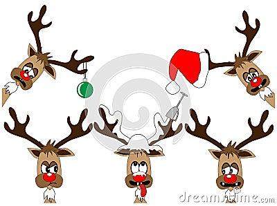Funny deers