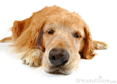 Funny Dog Stock Photos - Image: 2640813
