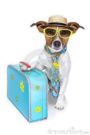 Free Funny Dog As A Tourist Stock Photography - 23896122