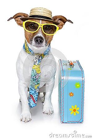 Funny dog as a tourist