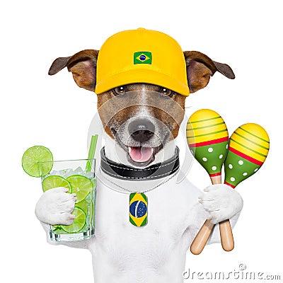 Free Funny Dog Brazil Stock Image - 29535071