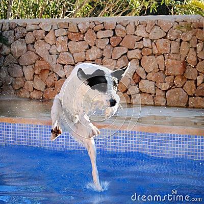 Funny dog portrait, pool jump