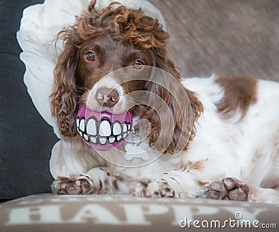 Funny dog teeth