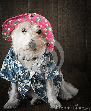 Funny Dog wearing hat
