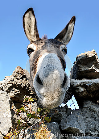 Free Funny Donkey Face Stock Photography - 84026582