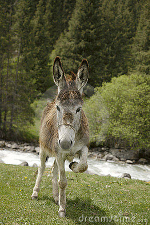 Free Funny Donkey Near River In Tien Shan Stock Photos - 19973793