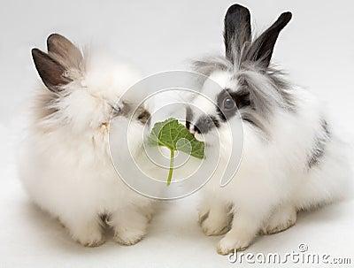 Funny dwarfish rabbits