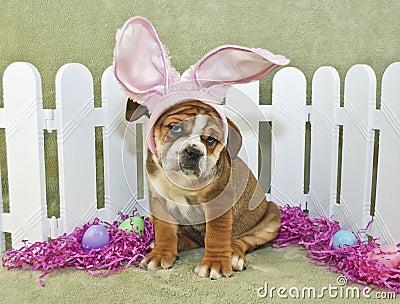 Funny Easter Bulldog