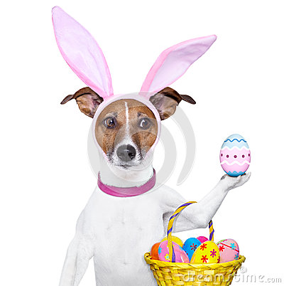 Free Funny Easter Dog Stock Photo - 29626740