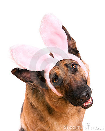 Funny Easter Dog Bunny