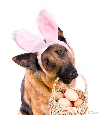 Free Funny Easter Dog With Basket Royalty Free Stock Photography - 4114887