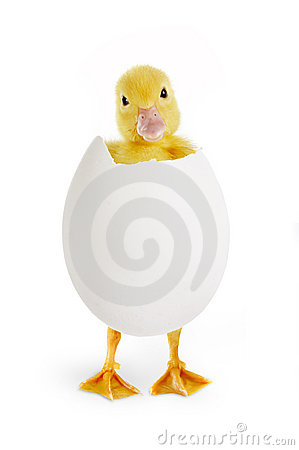 Free Funny Easter Greetings Royalty Free Stock Photography - 4002167