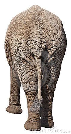 Free Funny Elephant Butt, Rear End, Backside, Isolated Royalty Free Stock Photography - 20139717