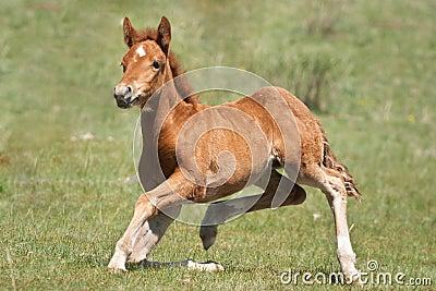 Funny foal