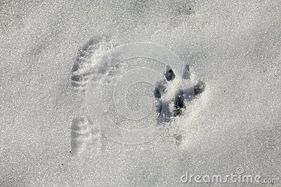 Funny Foot prints