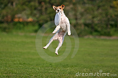 Funny frisbee catch