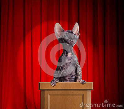 Funny hairless cat standing on a rostrum