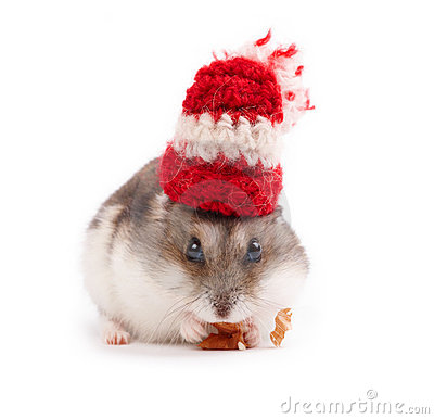 funny hamster pictures. FUNNY HAMSTER (click image to