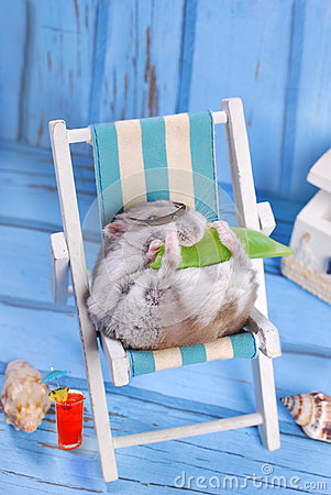 Free Funny Hamster Relaxing On Summer Holidays Royalty Free Stock Photo - 42553035
