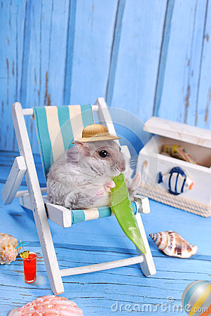 Free Funny Hamster Relaxing On Summer Holidays Royalty Free Stock Photo - 42553085