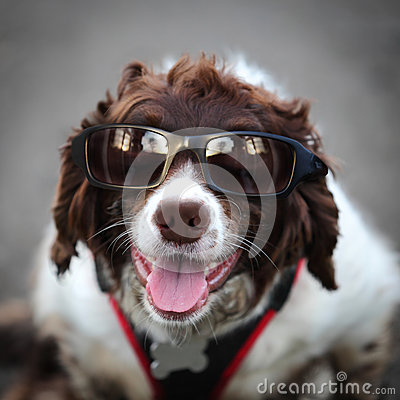Funny hipster dog wearing sunglasses