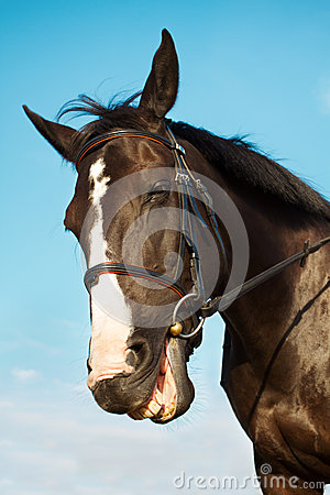 Free Funny Horse Head Smiling Stock Photos - 26538173