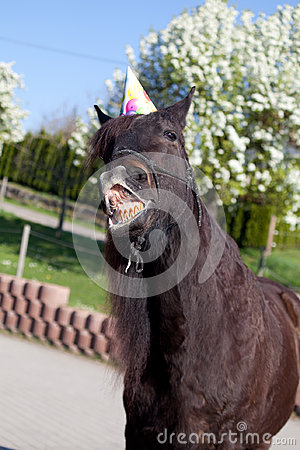 Free Funny Horse With Party Hat Celebrate His Birthday Stock Photography - 96492022